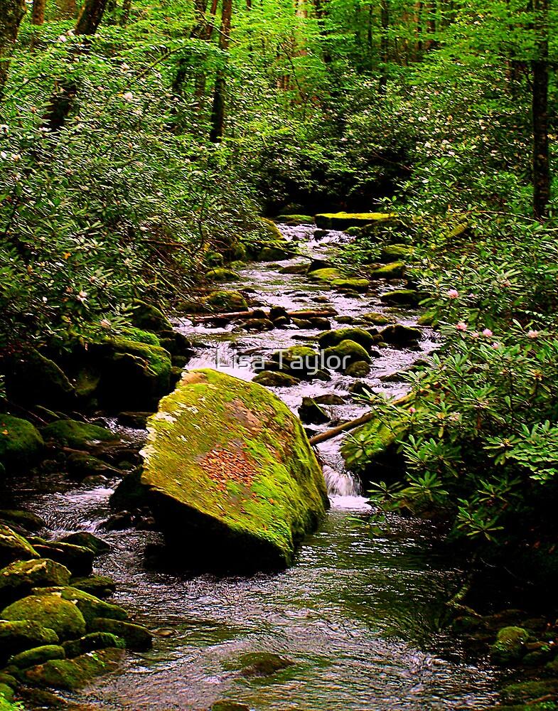 Rhododendren Stream by Lisa Taylor