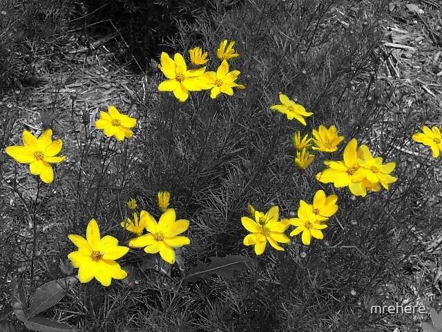 Yellow Petals by mrehere