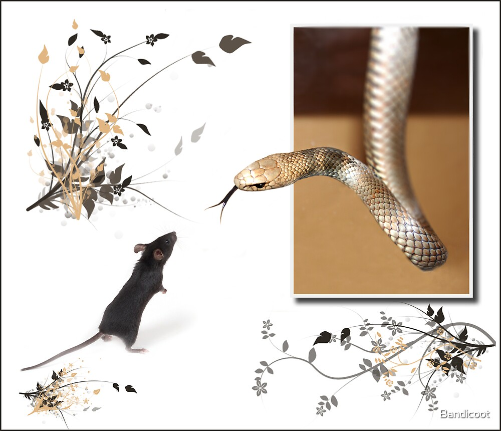 Brown snake and mouse by Bandicoot