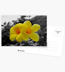 Touch of Color Postcards