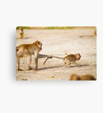 Tail Pull Canvas Print