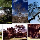 The Beauty of Trees by Clayton Bruster