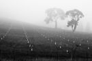 Trees in the Fog II by Mark German