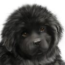 Newfie puppy face by Patricia Reeder Eubank