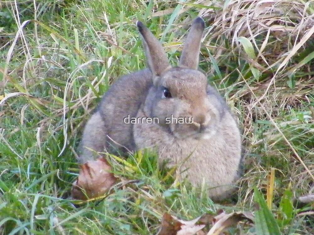 sexy fat wild bunny  by darren  shaw