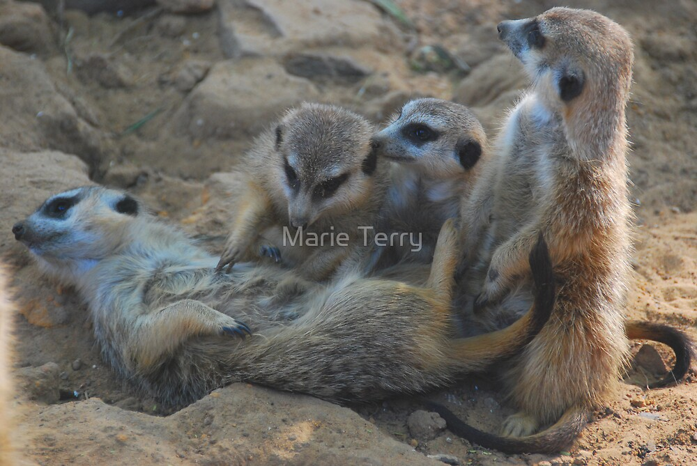 Tickle Me Not... by Marie Terry