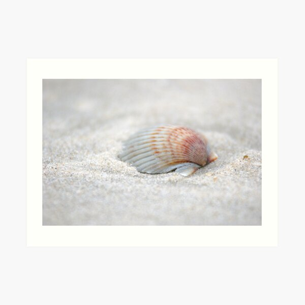 i got another seashell for you Art Print