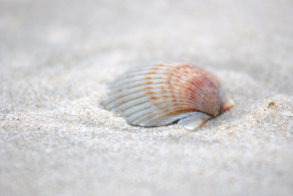 i got another seashell for you by ALEX GRICHENKO