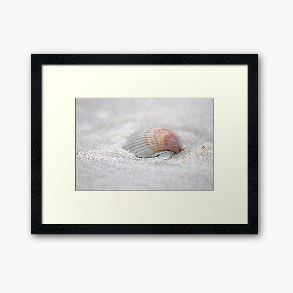 i got another seashell for you Framed Art Print
