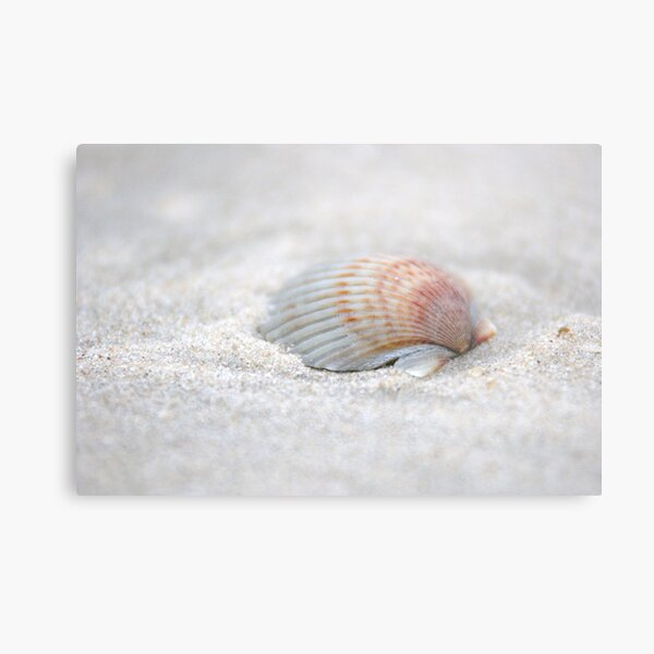i got another seashell for you Metal Print