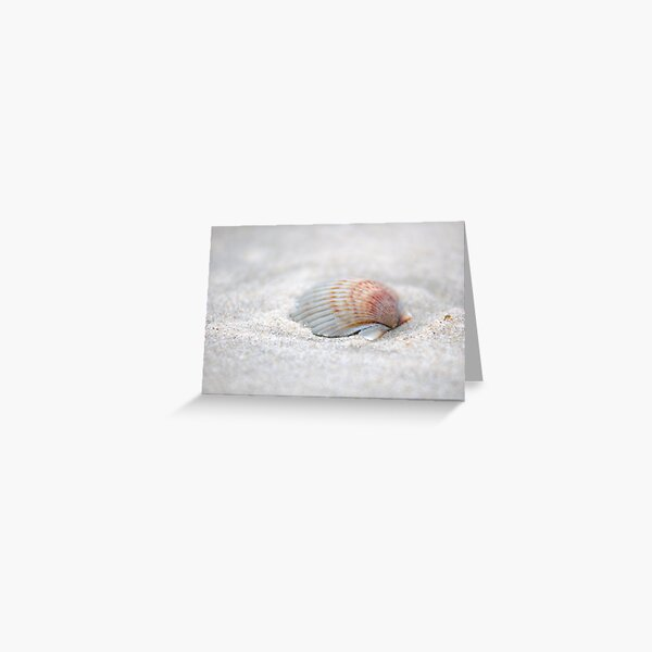 i got another seashell for you Greeting Card