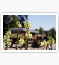Mackinac Island Horse Drawn Carriage Bokeh and Snap Dragons Sticker