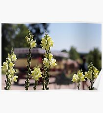 Mackinac Island Horse Drawn Carriage Bokeh and Snap Dragons Poster