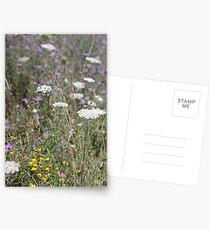 Mackinac Island Wildflowers Postcards
