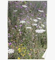 Mackinac Island Wildflowers Poster