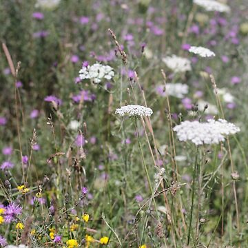 Mackinac Island Wildflowers by photolodico