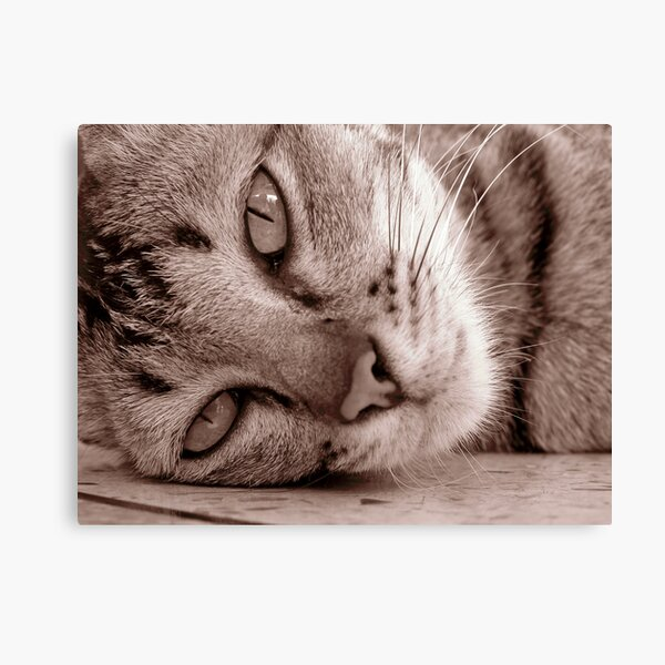 Thai cat Canvas Print