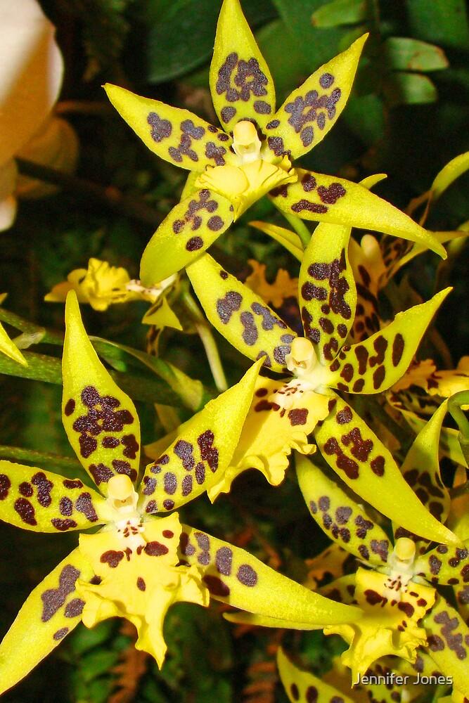 Yellow Orchid 2 by Jennifer Jones