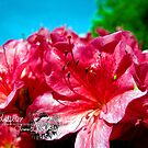 red azealeas by LoreLeft27