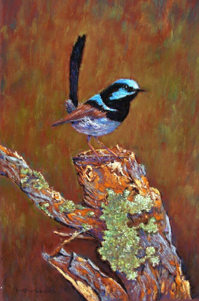 'Superb Fairy Wren' by Helen Miles