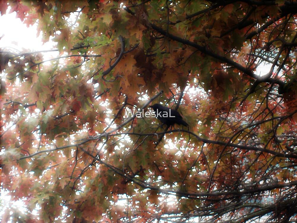 Bird Hidding by WaleskaL