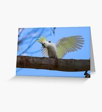 Sulphur Crested Cockatoo with Attitude Greeting Card