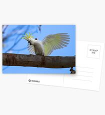 Sulphur Crested Cockatoo with Attitude Postcards