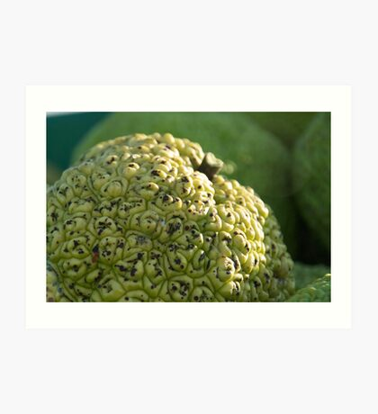 Hedge Apple: An Osage Orange Art Print