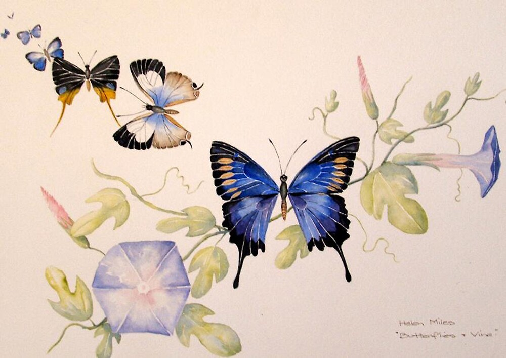 'Butterflies & Vine' by Helen Miles