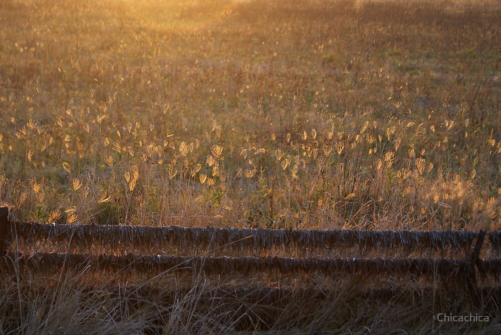 Fields of gold by Chicachica