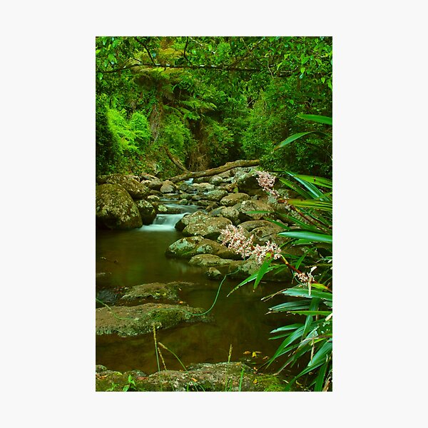 Food for the soul at Picnic Rock Photographic Print