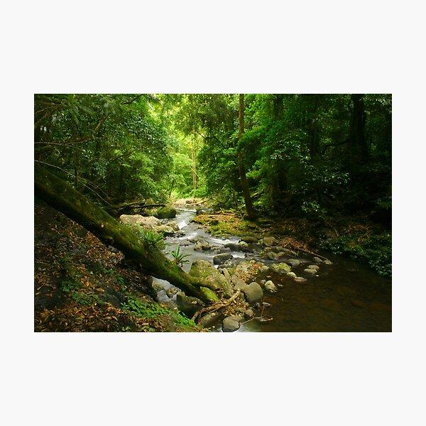 Lamington Dream Photographic Print