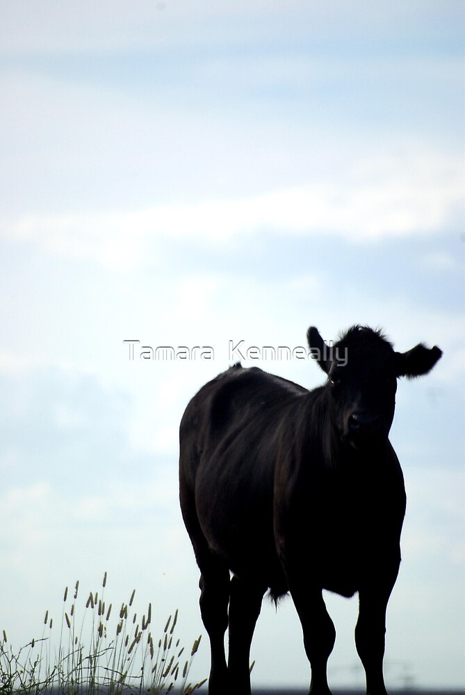 Away from the herd by Tamara  Kenneally