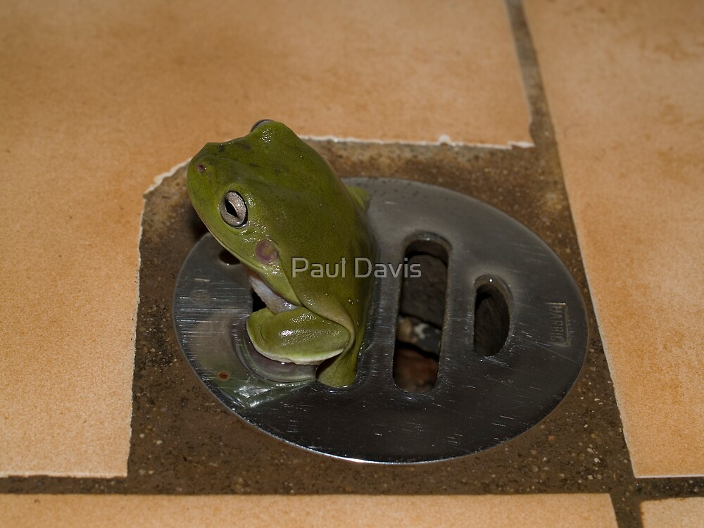 Frog in a Hole I by Paul Davis