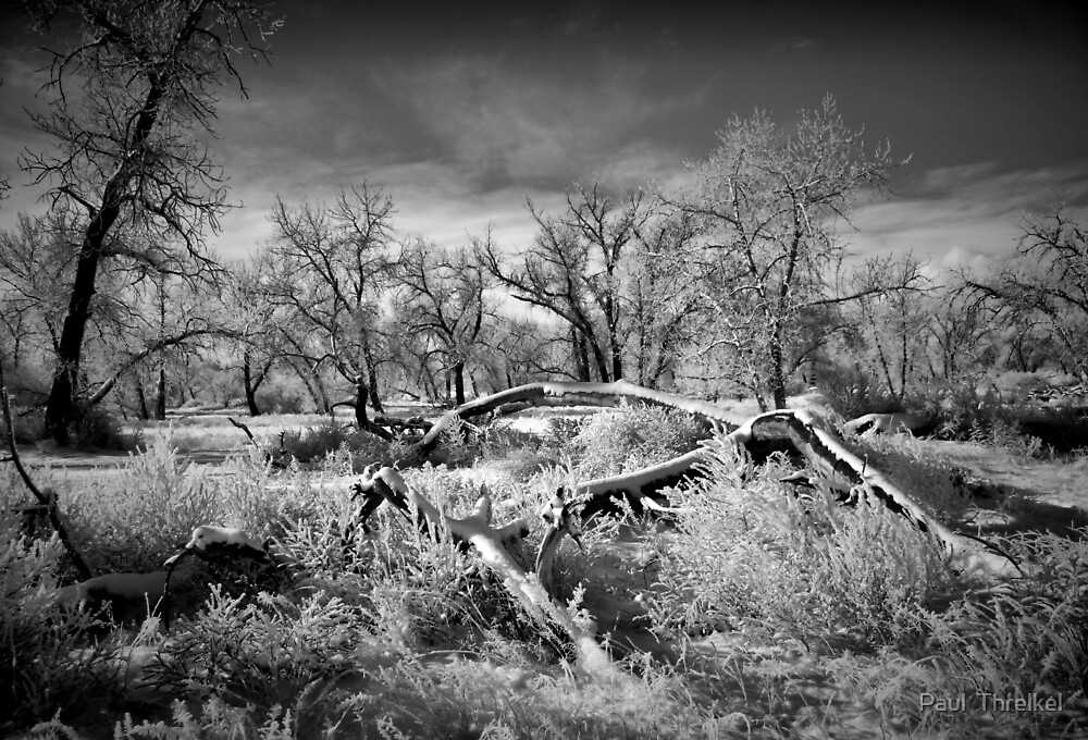 Snow and Frost by Paul  Threlkel