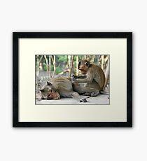 Monkey Island Pals Framed Print