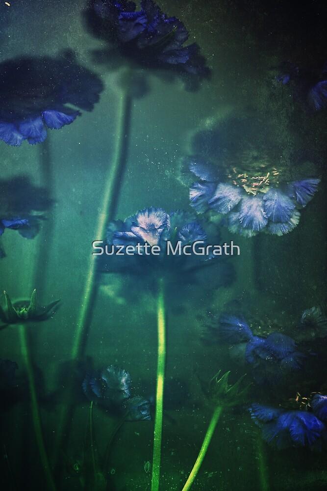 Blue Scabiosa by Suzette McGrath