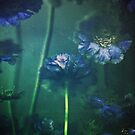 Blue Scabiosa by Suzette McGrath