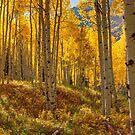 Herbst Aspen Forest Aspen Colorado Panorama von OLena  Art ❣️