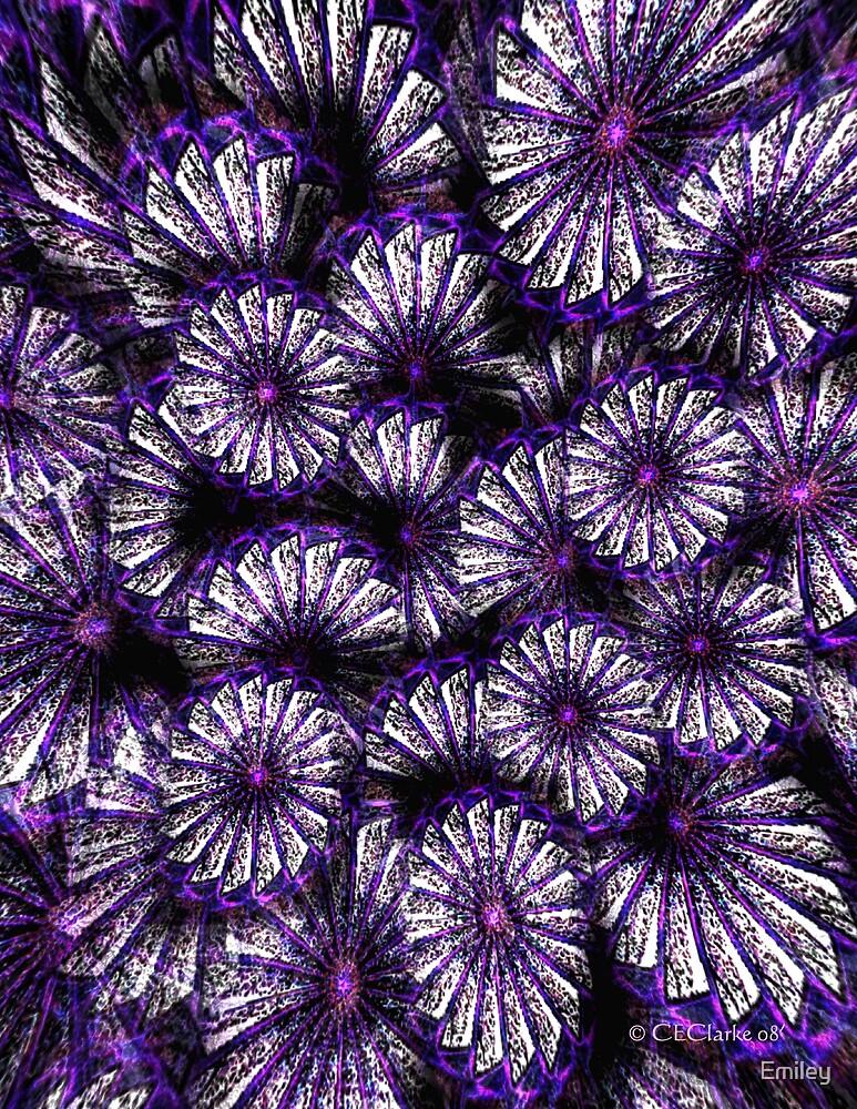 Purple Flowers by Emiley