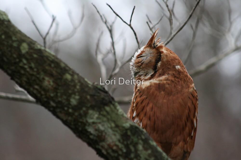 EASTERN SCREECH OWL - SIDE VIEW by Lori Deiter