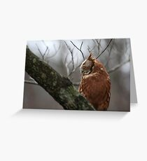 EASTERN SCREECH OWL - SIDE VIEW Greeting Card