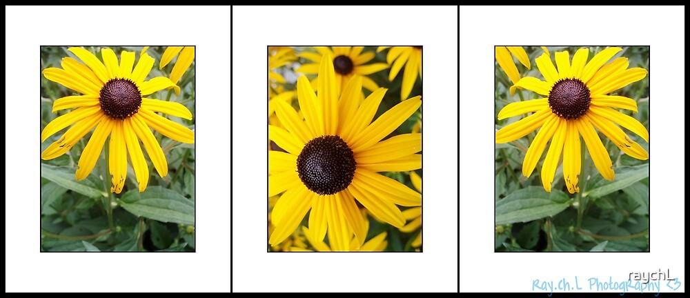 Yellow Flowers <3 by raychL