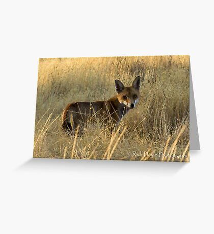 On the Hunt -2 Greeting Card