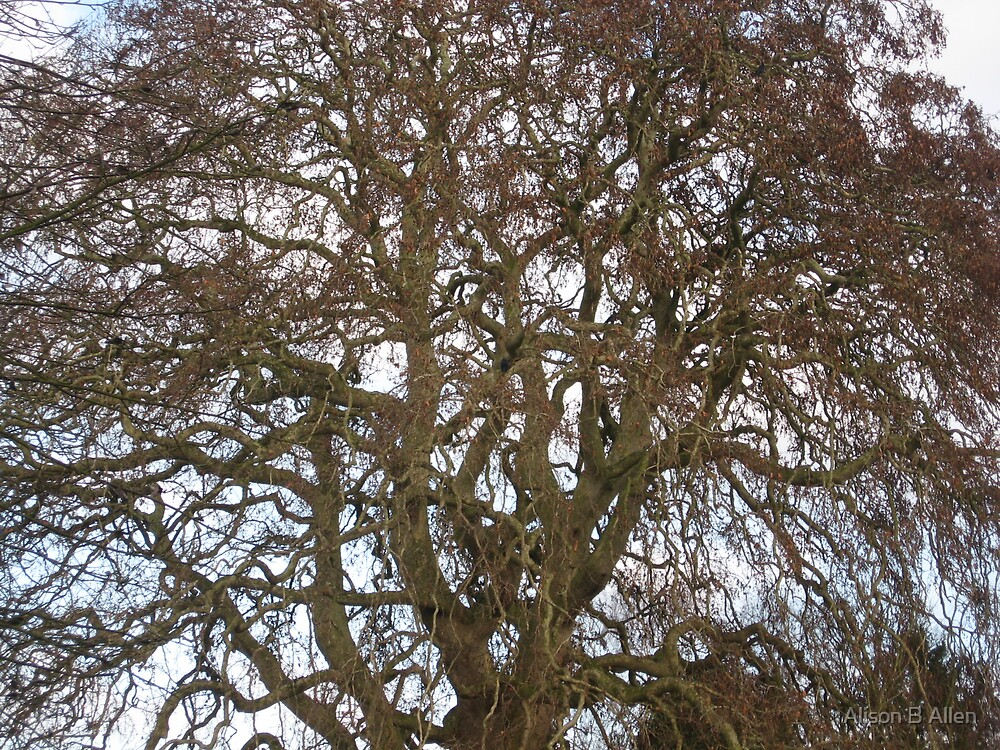 The perfect tree (Medbourne Leicestershire Dec 2008) by fatchickengirl