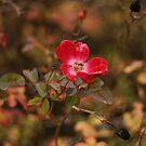 red on red by Bernard Raskin