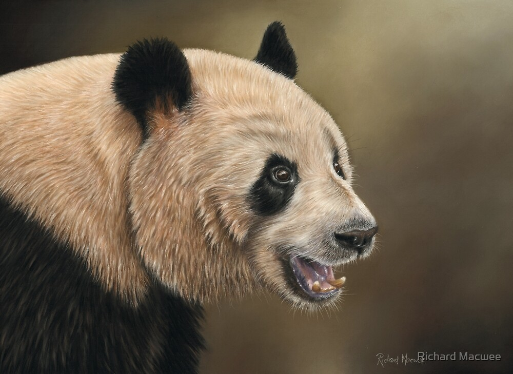 Giant Panda by Richard Macwee