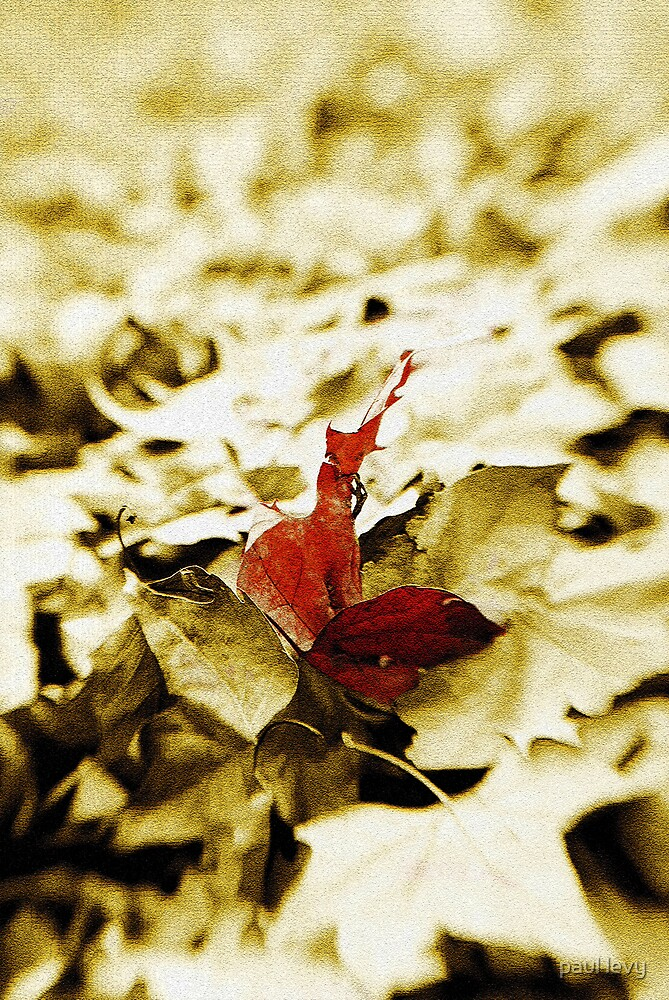 one leaf by paul levy