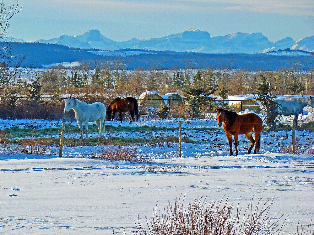 Horse Country by Al Bourassa