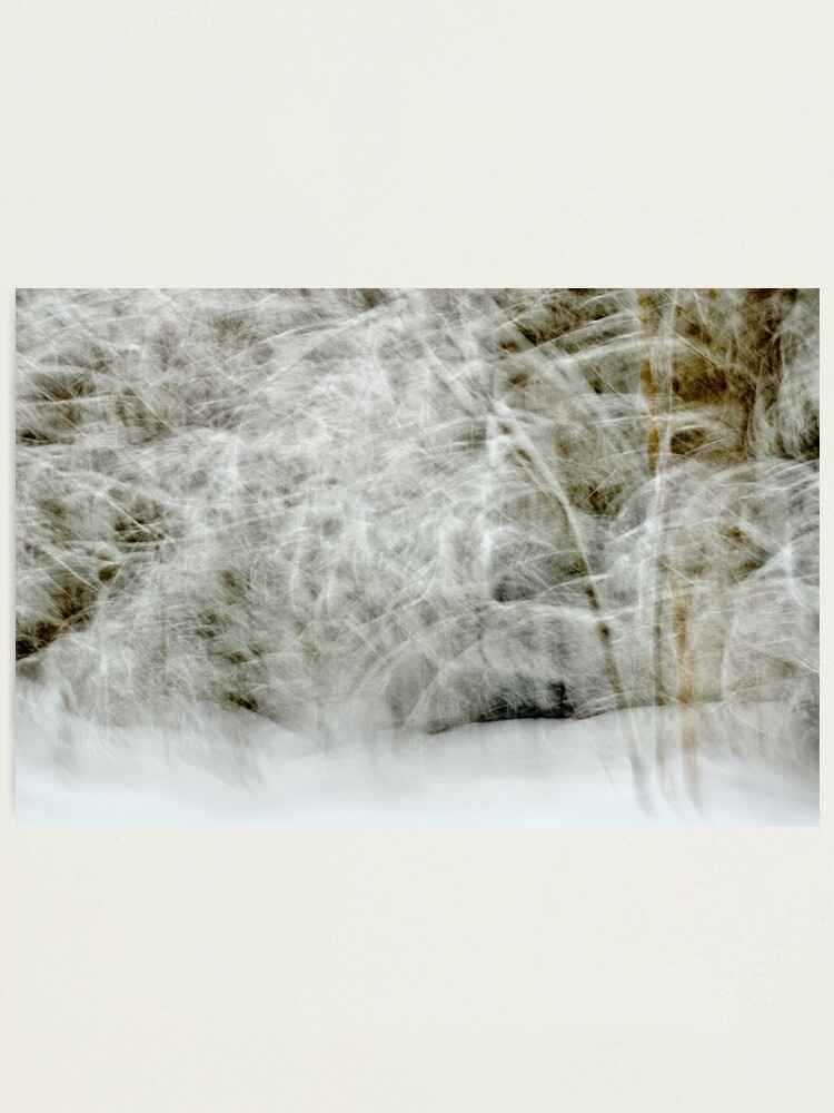 Alternate view of Snowstorm in Valserine forest Photographic Print